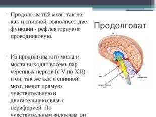 Продолговатый мозг Продолговатый мозг, так же как и спинной, выполняет две фу
