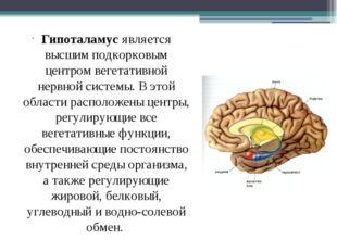 Гипоталамус является высшим подкорковым центром вегетативной нервной системы