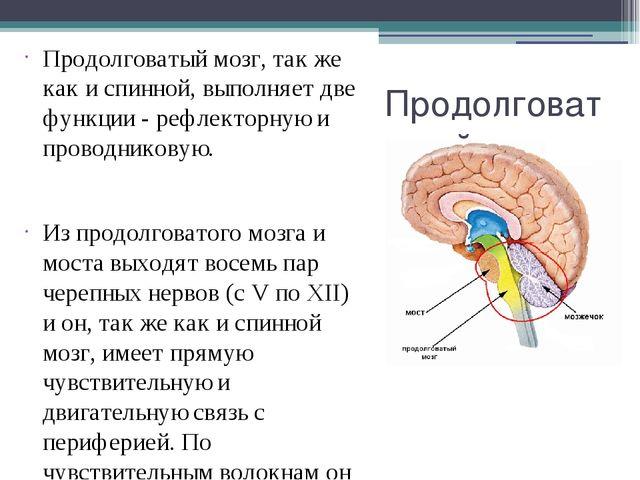 Продолговатый мозг Продолговатый мозг, так же как и спинной, выполняет две фу...
