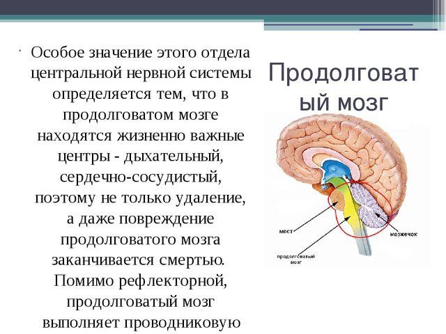 Продолговатый мозг Особое значение этого отдела центральной нервной системы о...