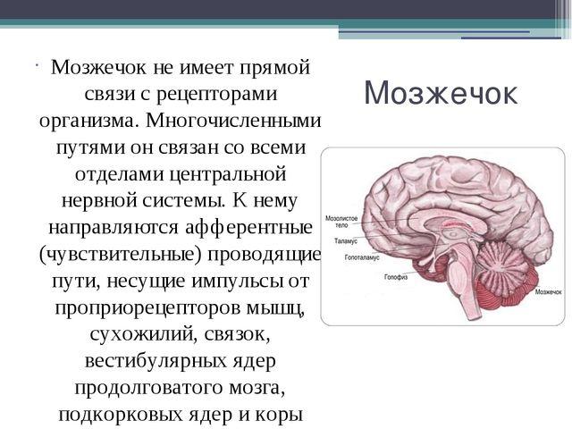 Мозжечок Мозжечок не имеет прямой связи с рецепторами организма. Многочисленн...