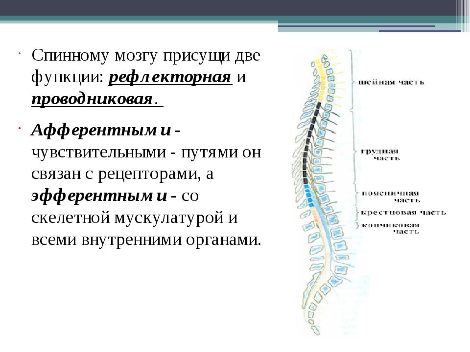 Спинному мозгу присущи две функции: рефлекторная и проводниковая. Афферентны...
