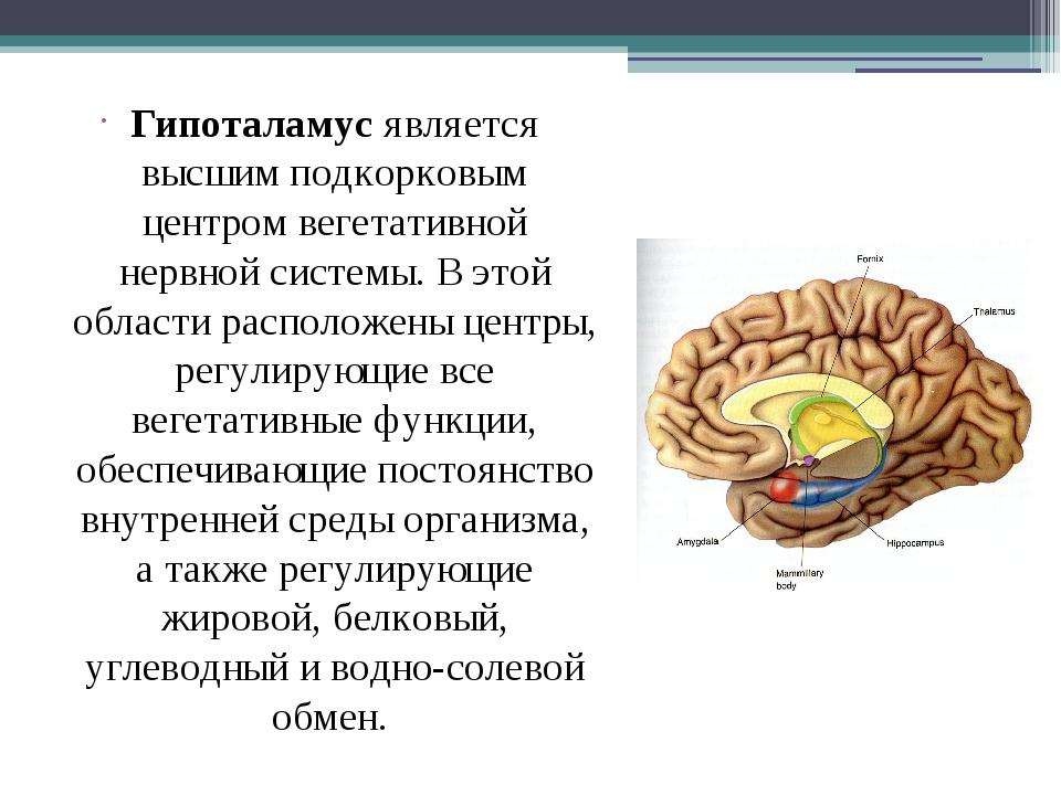 Гипоталамус является высшим подкорковым центром вегетативной нервной системы...