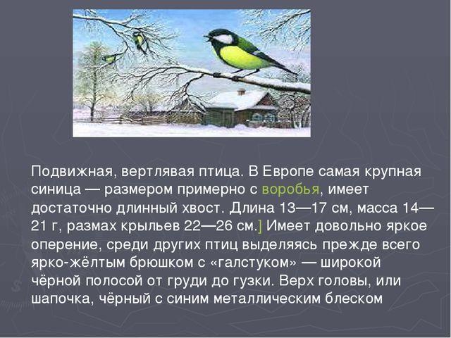 Подвижная, вертлявая птица. В Европе самая крупная синица— размером примерно...