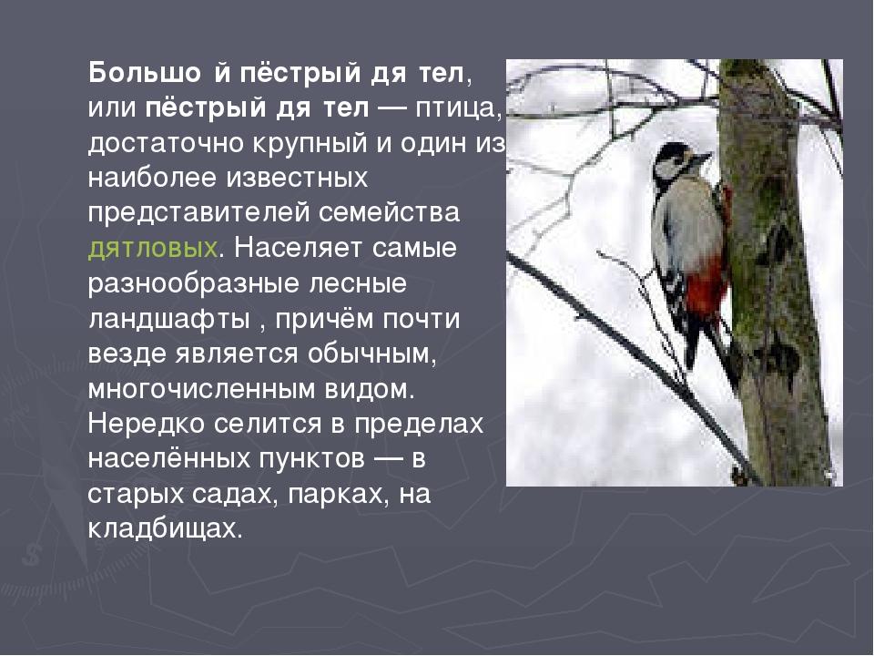 Большо́й пёстрый дя́тел, илипёстрый дя́тел— птица, достаточно крупный и оди...