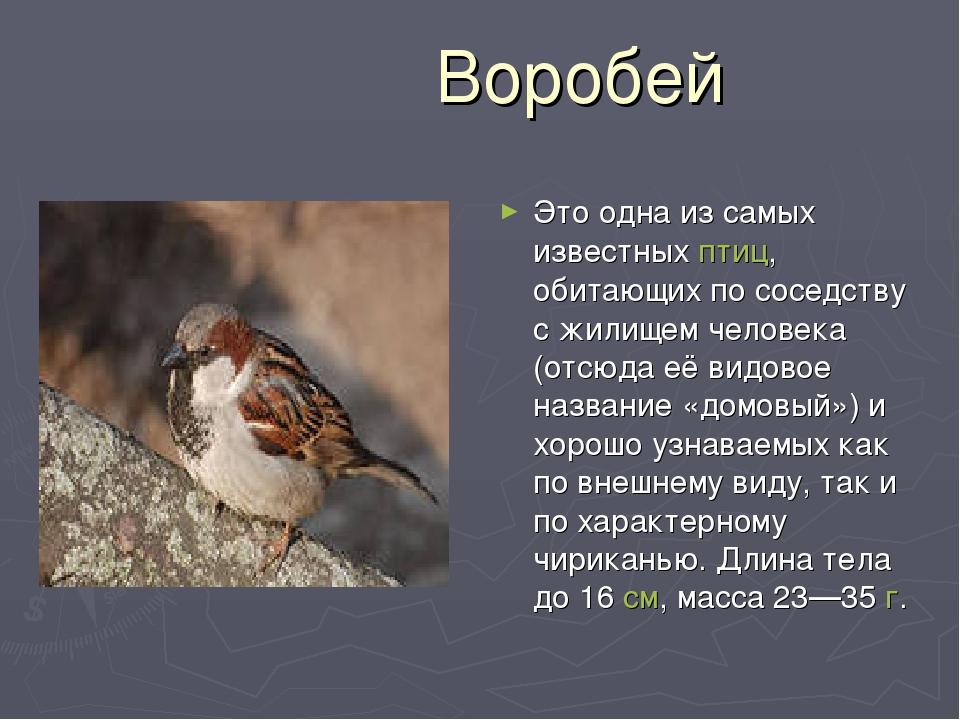 Воробей Это одна из самых известныхптиц, обитающих по соседству с жилищем ч...