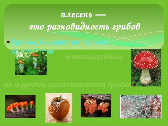 Грибы, бывают не только съедобные плесень — это разновидность грибов и несъед...