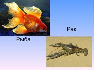 Рыба Рак