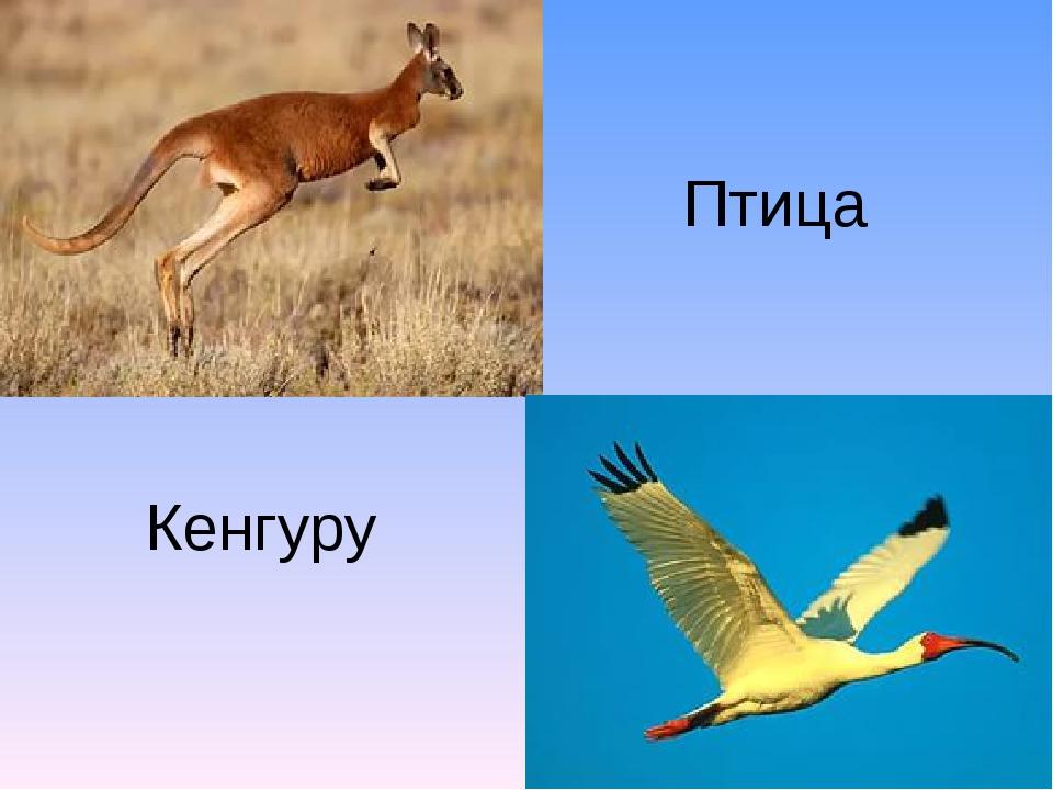 Кенгуру Птица
