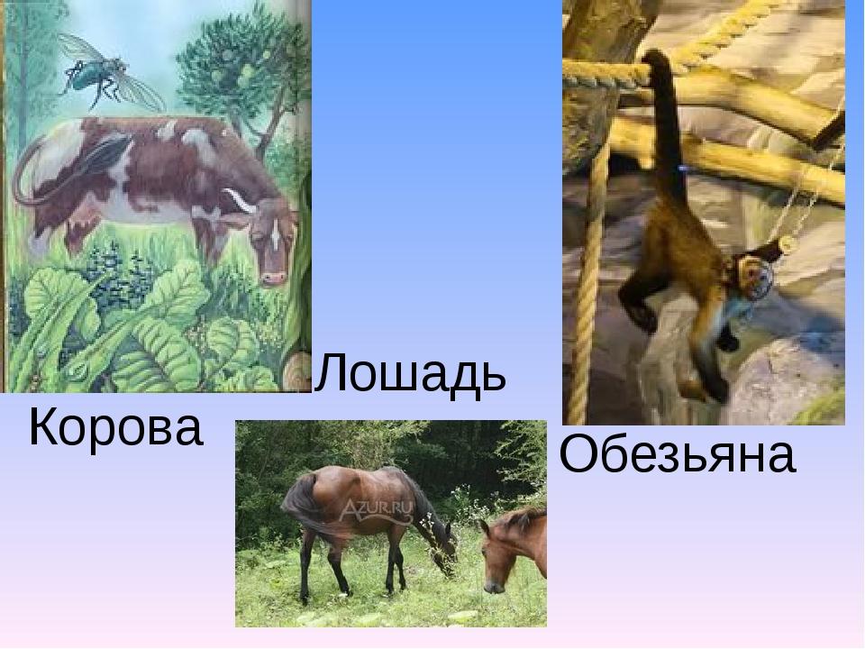 Обезьяна Корова Лошадь