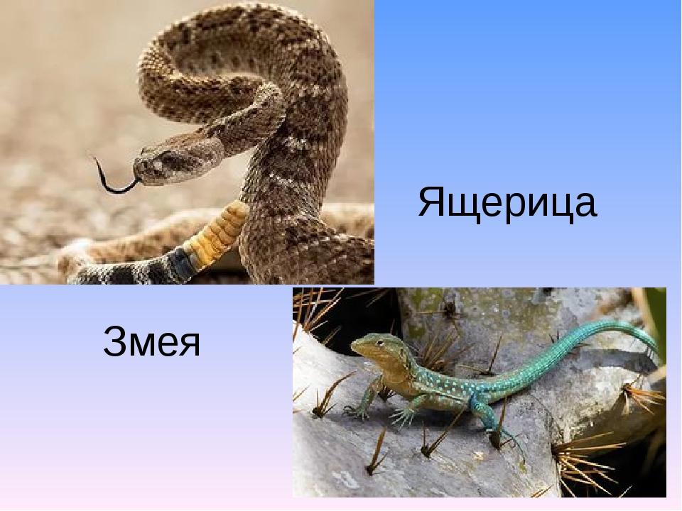 Змея Ящерица