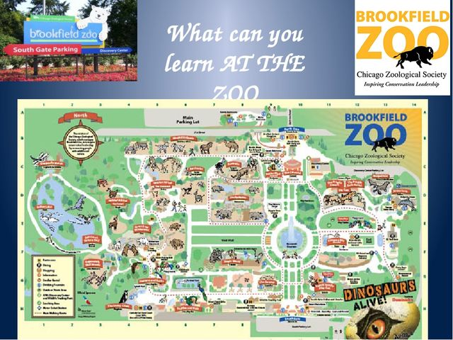 The plan of our work Meet different animals Describe the animals Learn to spe...