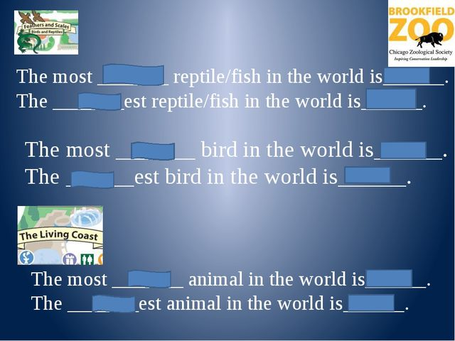 *The world's largest fish is the whale shark. It is not dangerous. It's harm...
