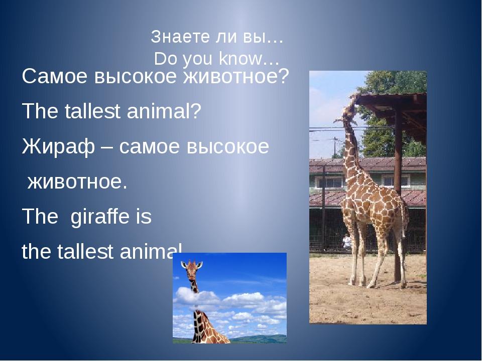 Знаете ли вы… Do you know… Самое забавное животное? The funniest animal? Обез...