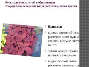 Роль солнечных лучей в образовании хлорофилла,испарение воды растением, запах