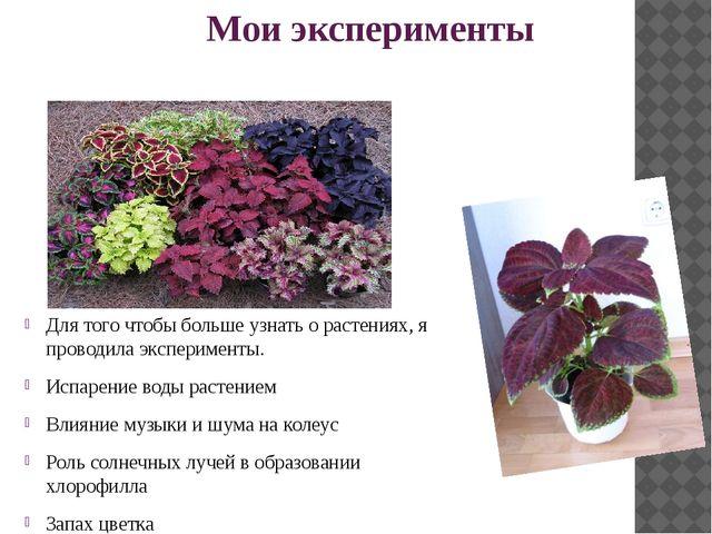 Мои эксперименты Для того чтобы больше узнать о растениях, я проводила экспе...