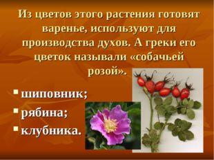Из цветов этого растения готовят варенье, используют для производства духов.