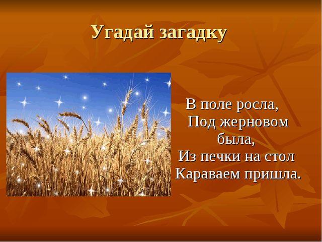 Угадай загадку В поле росла, Под жерновом была, Из печки на стол Караваем при...