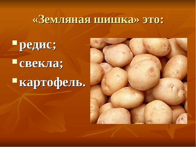 «Земляная шишка» это: редис; свекла; картофель.