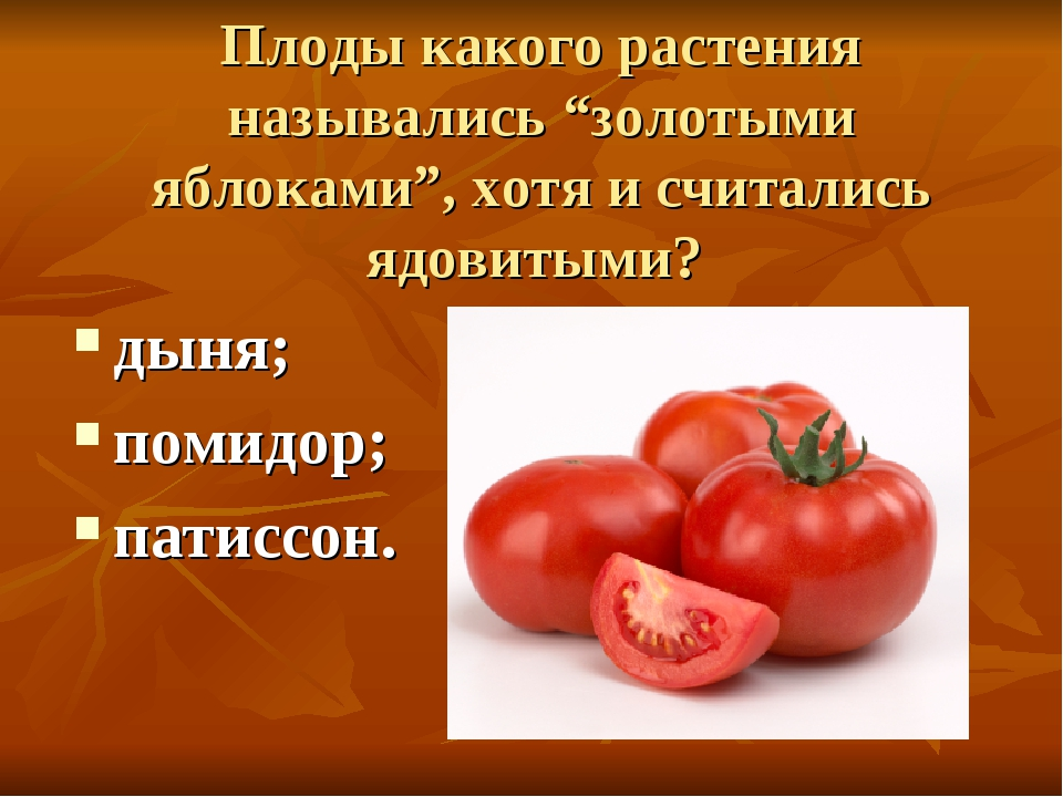 """Плоды какого растения назывались """"золотыми яблоками"""", хотя и считались ядовит..."""