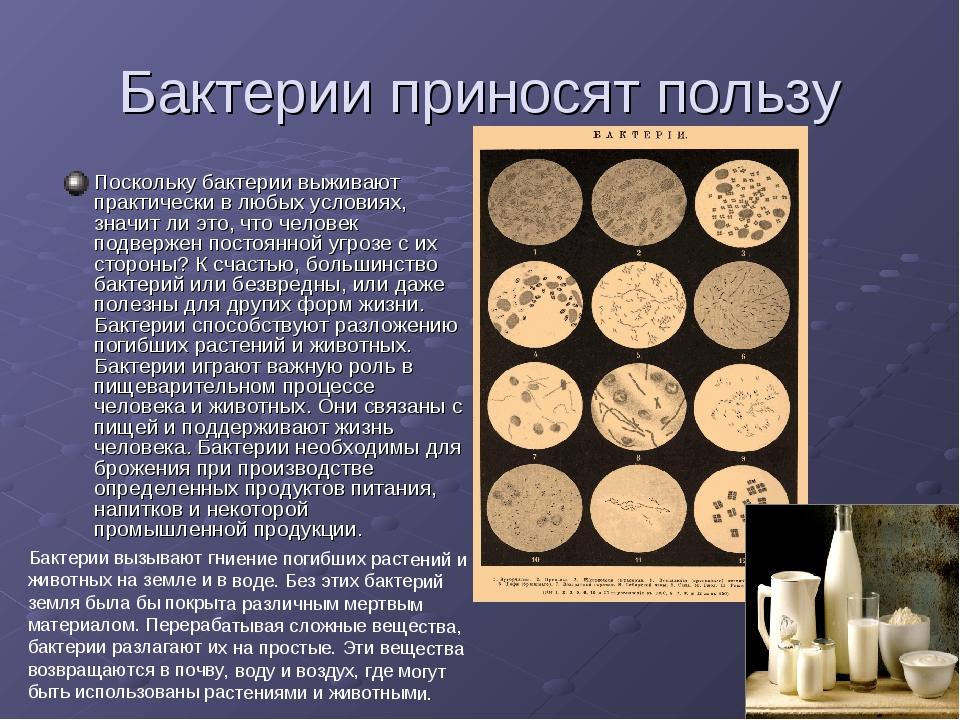Бактерии приносят пользу Поскольку бактерии выживают практически в любых усло...