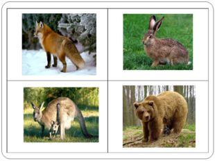 Кенгуру живет не в наших лесах.