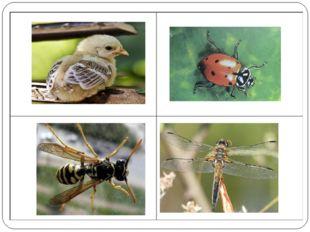 Это- птенчик, а не насекомое.