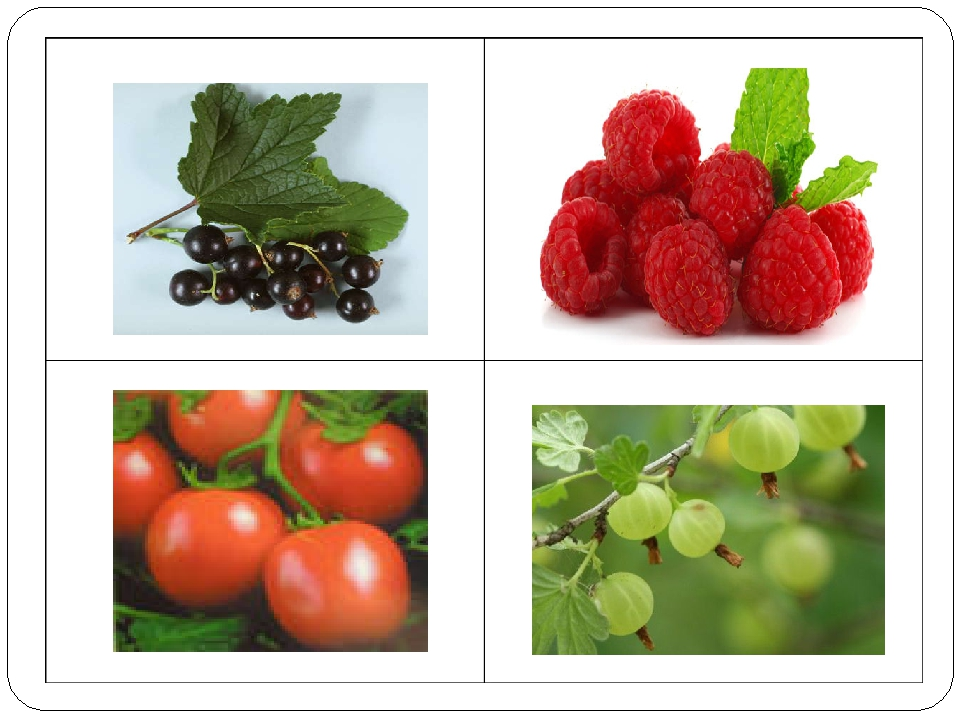 Помидоры – не ягоды, а овощи.