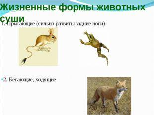 Жизненные формы животных суши 1. Прыгающие (сильно развиты задние ноги) 2. Бе