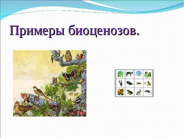 Примеры биоценозов.