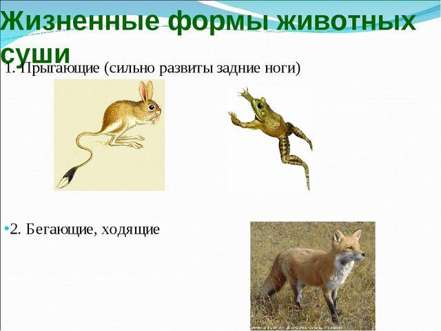 Жизненные формы животных суши 1. Прыгающие (сильно развиты задние ноги) 2. Бе...