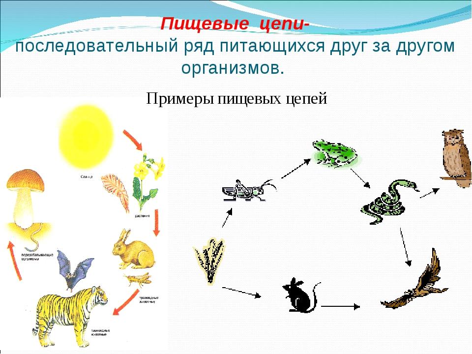 Экологические цепочки для дошкольников в картинках, большие цветов картинки