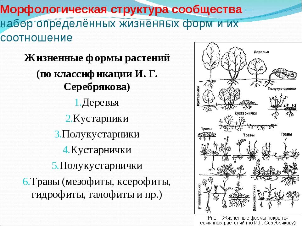 Морфологическая структура сообщества – набор определённых жизненных форм и их...