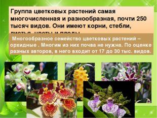 Группа цветковых растений самая многочисленная и разнообразная, почти 250 тыс