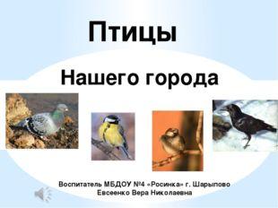 Птицы Нашего города Воспитатель МБДОУ №4 «Росинка» г. Шарыпово Евсеенко Вера