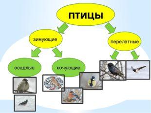 птицы зимующие перелетные оседлые кочующие