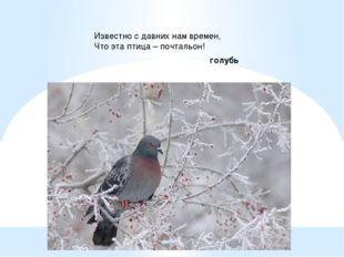 Известно с давних нам времен, Что эта птица – почтальон! голубь