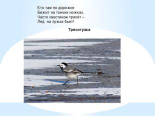 Кто там по дорожке Бежит на тонких ножках. Часто хвостиком трясёт – Лед на лу
