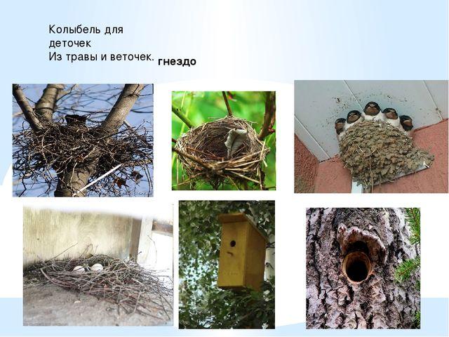 Колыбель для деточек Из травы и веточек. гнездо