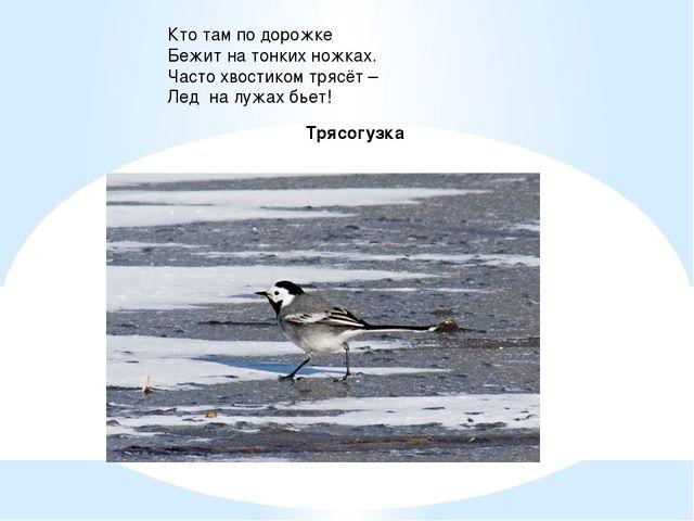 Кто там по дорожке Бежит на тонких ножках. Часто хвостиком трясёт – Лед на лу...