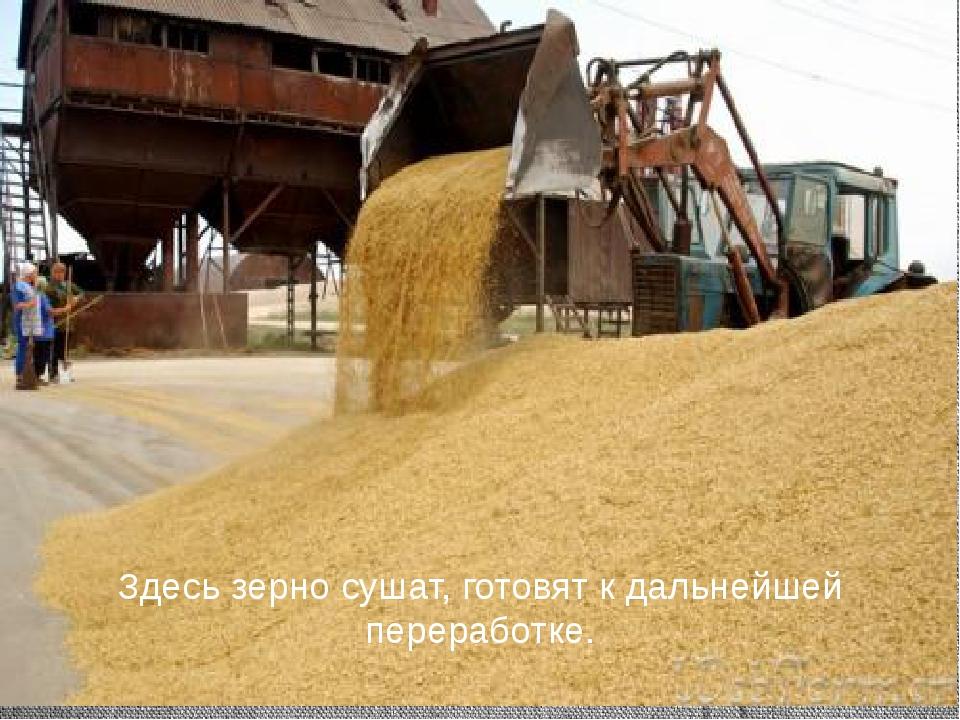 Здесь зерно сушат, готовят к дальнейшей переработке.