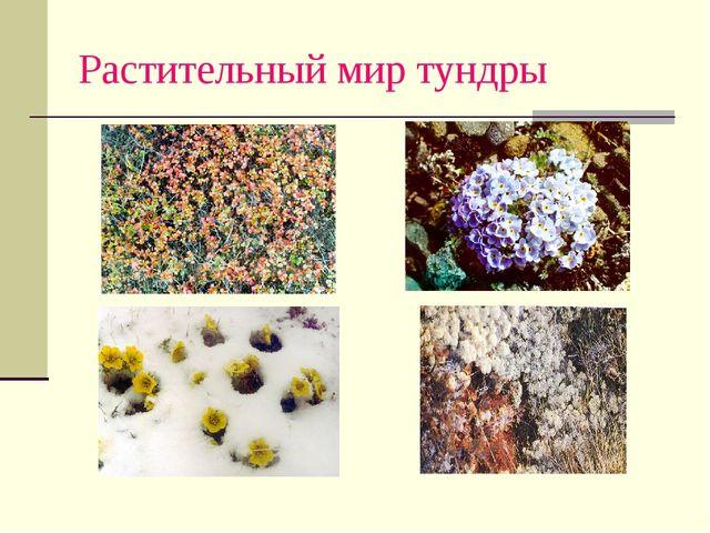 Растительный мир тундры