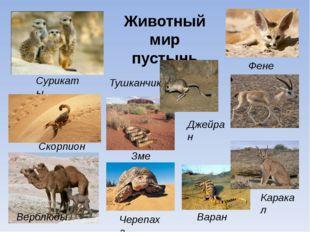 Животный мир пустынь Сурикаты Скорпион Тушканчик Верблюды Змеи Черепаха Варан