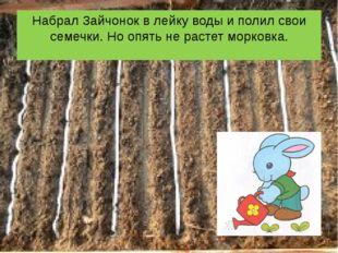 Набрал Зайчонок в лейку воды и полил свои семечки. Но опять не растет морковка.