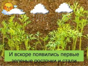 И вскоре появились первые зеленые росточки и стали расти