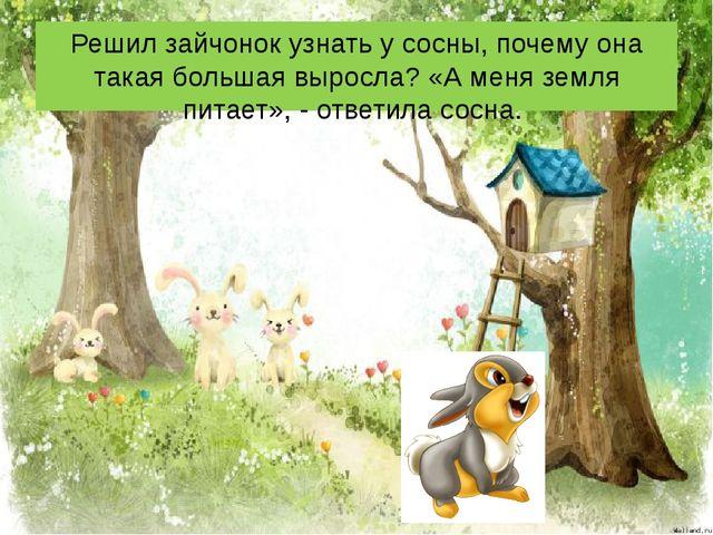 Решил зайчонок узнать у сосны, почему она такая большая выросла? «А меня земл...
