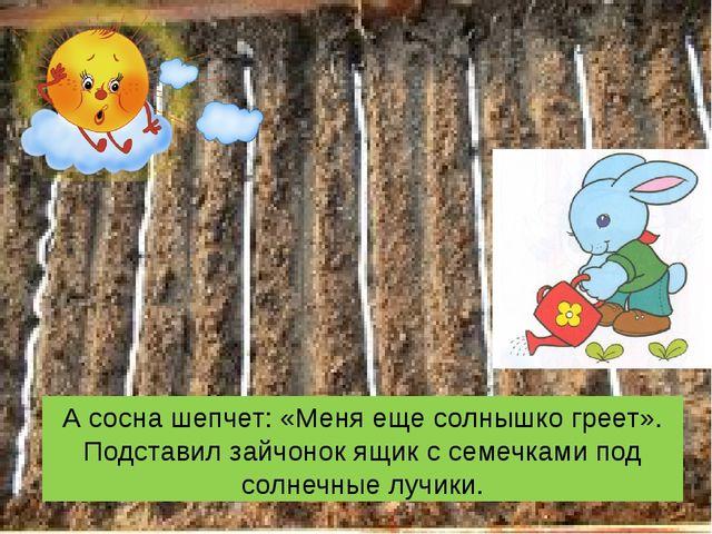 А сосна шепчет: «Меня еще солнышко греет». Подставил зайчонок ящик с семечкам...