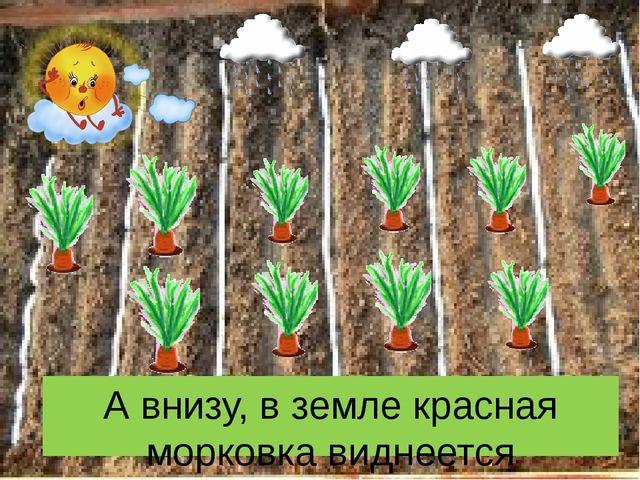 А внизу, в земле красная морковка виднеется