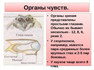 Органы чувств. Органы зрения представлены простыми глазами. Обычно их бывает