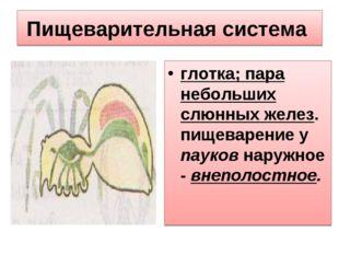 Пищеварительная система глотка; пара небольших слюнных желез. пищеварение у п